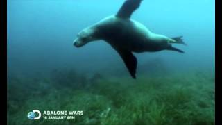 Trailer Abalone Wars Discovery Channel January Highlight