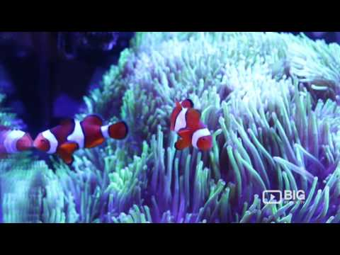 Aquarium Gallery a Marine and Freshwater Supply Shop in Perth selling Corals, Plants and Fish