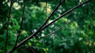 白噪音【下雨聲】【水滴聲】4小時高音質 ♪ MaHaMusic ♪