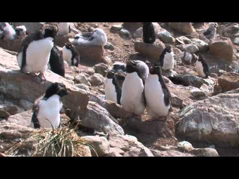 South Georgia & The Falklands Aboard National Geographic Explorer