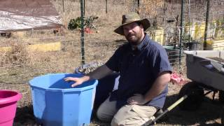 Growing Potatoes In Potato Cages And Containers