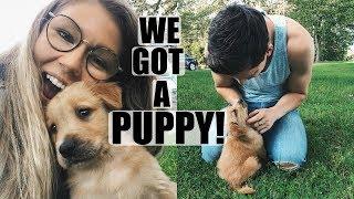 We Got A Puppy!!