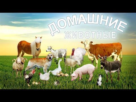 Домашние животные и их детёныши развивающее видео. Звуки домашних животных.