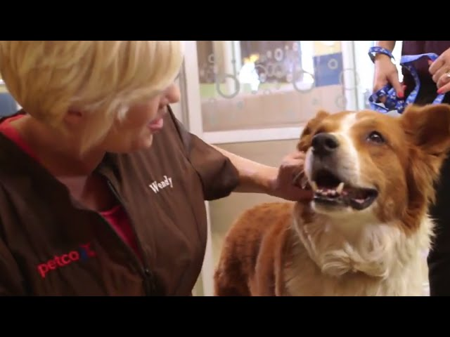 How to Find a Pet Stylist For Your Dog (Petco)