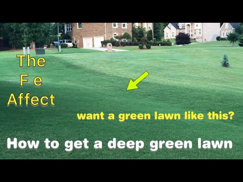 How to get a deep green lawn