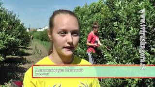 Berba visanja u Poljoprivrednoj skoli