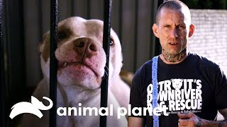 ¡Un refugio en una casa en Detroit! | Pit bulls y convictos | Animal Planet