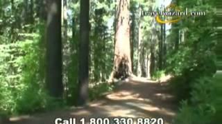 Yosemite Redwoods Video