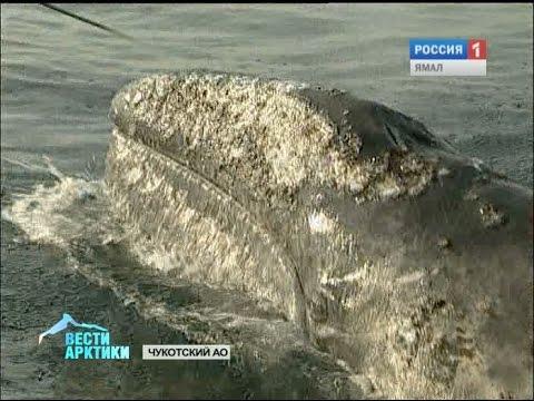 ловля морского кита