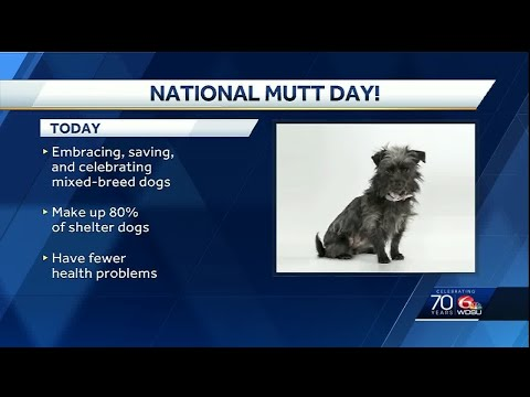 WDSU: Ask the Vet - National Mutt Day