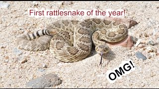 HOW TO KILL A RATTLESNAKE!