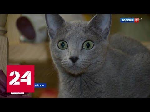 Литовская таможня ввела новые правила пересечения границы с животными - Россия 24