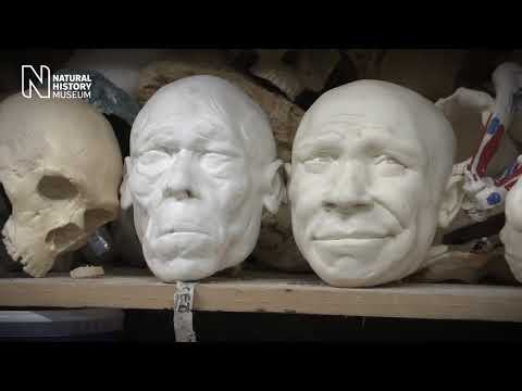 The making of our Neanderthal and early Homo sapiens models | Natural History Museum