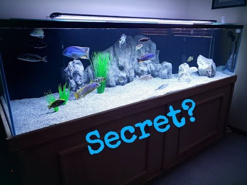 How To Make Your Fish GROW FASTER