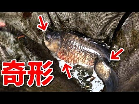 都市河川の闇!汚染された川で奇形の魚が捕れまくる!