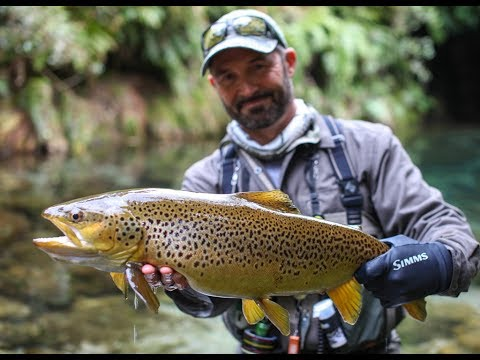 Fly fishing New Zealand 'the DREAM STREAM'