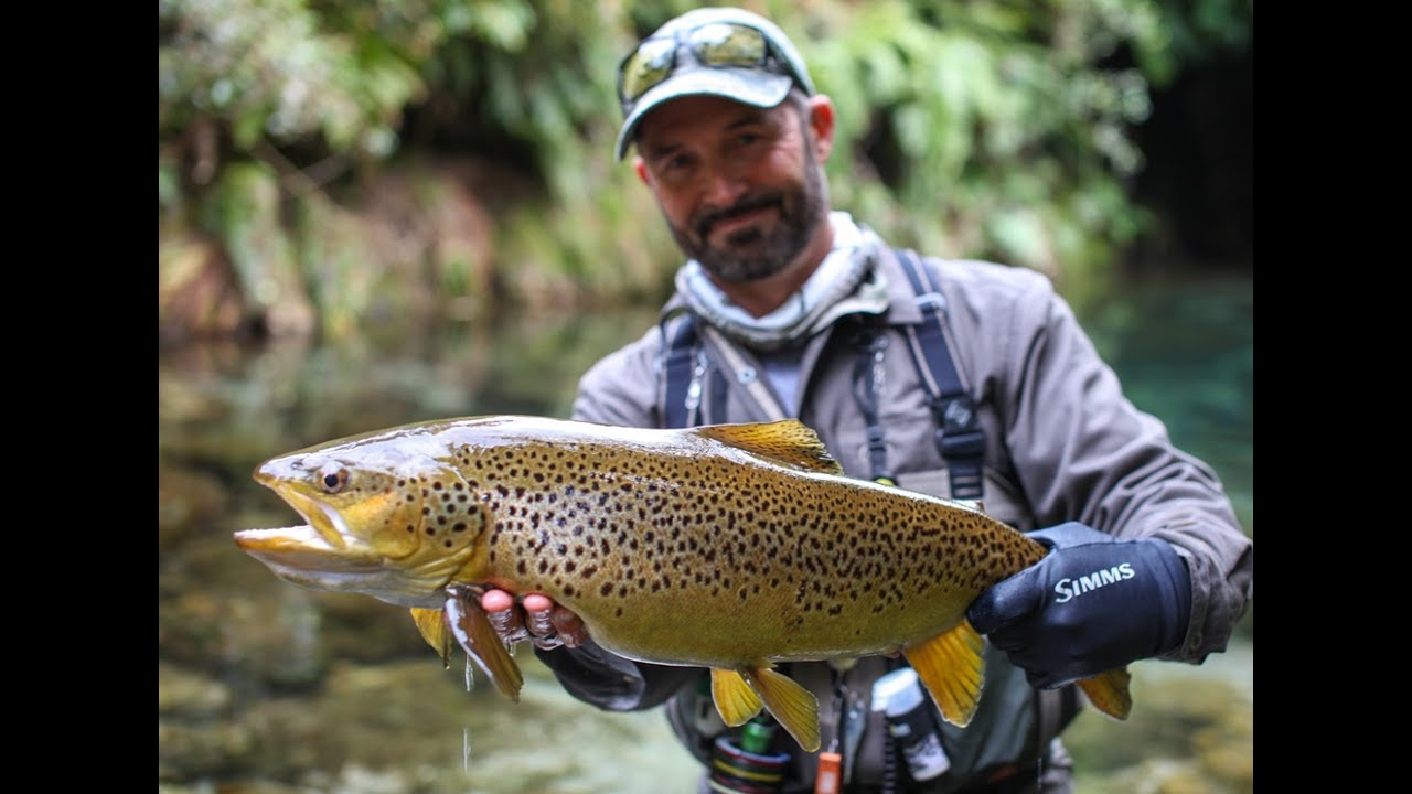 Fly fishing new zealand 39 the dream stream 39 youtube for Dream stream fishing report