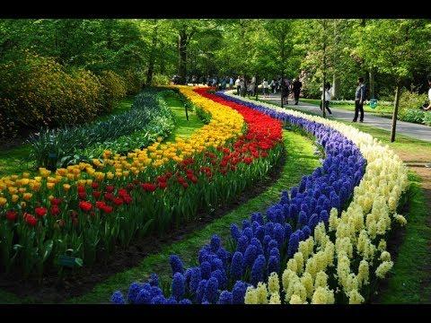 Holambrasp Cidade Das Flores