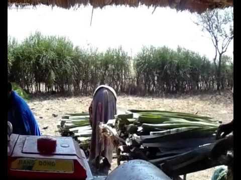 SISAL FARMING IN KISHAPU TANZANIA