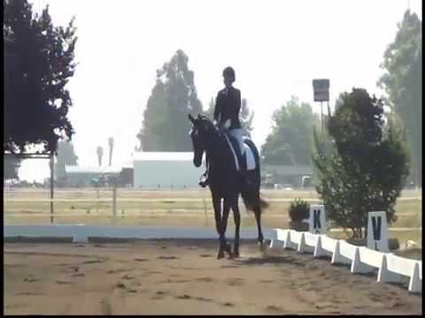 DRESSAGE INTRO TEST C