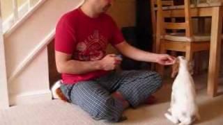Puppy: 8 Week Cocker Spaniel Tricks