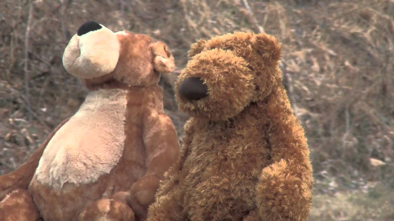 Teddy Bear Hund : teddy bear youtube ~ A.2002-acura-tl-radio.info Haus und Dekorationen