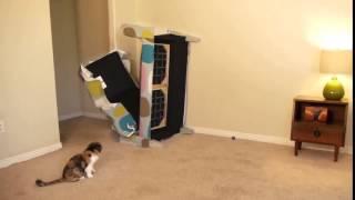 Коты и кошки: Мне кажется или у моего кота есть суперсила?