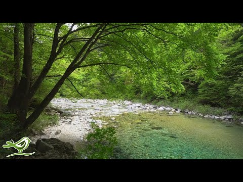 Beautiful Relaxing Music - Flute, Guitar & Piano Music with Birds Singing