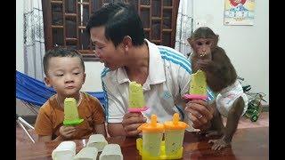 Baby Monkey   Doo Family Enjoys Avocado Ice Cream Made By Mom