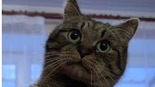 Обычная кошка спасла жизнь десяткам людей | Критическая точка