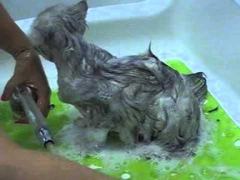 Come lavare un gattino parte 1 doovi - Come fare il bagno al cane ...