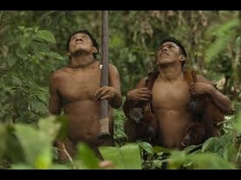 hunt  monkeys and boar Yanomami indigenous in the Amazon jungle -Full Documentary 1983