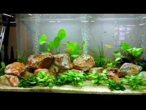 Aquarien Dekoration