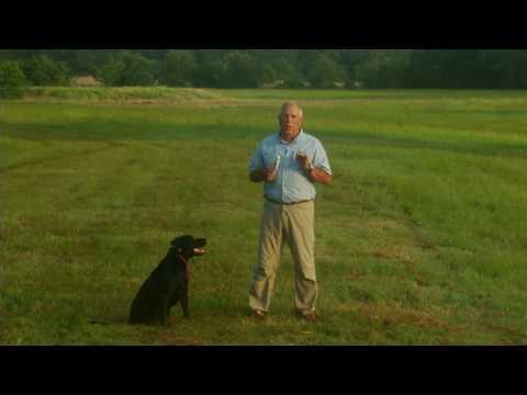 Return with a Retriever Puppy