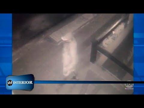 Polícia procura pelos homens que furtaram vasos de flores em restaurante