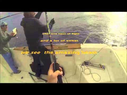 Sydney Offshore Trolling