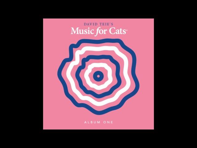 David Teie – Katey Moss Catwalk