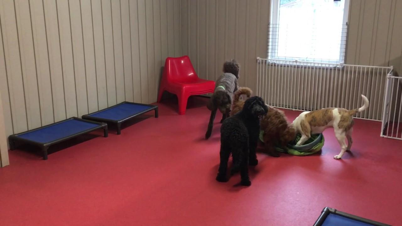 RedDog play area