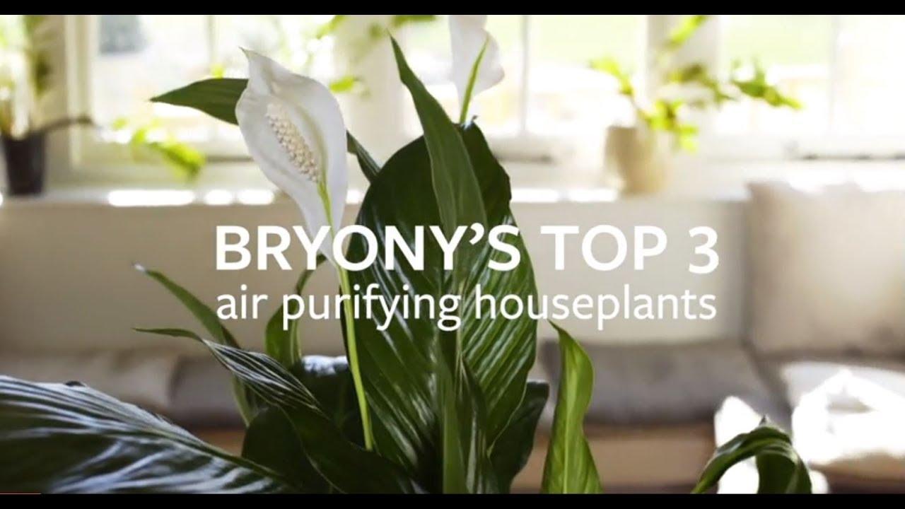 Houseplants: to support human health / RHS Gardening