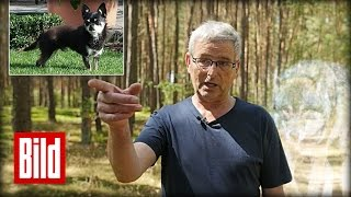Wölfe töten Hund - Die letzte Gassi-Runde von Chihuahua Krümel