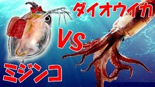 1mのミジンコ vs ダイオウイカ 美くしすぎるミジンコの世界征服 大怪獣ミジン娘 実況プレイ 4