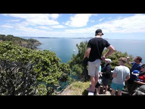 Dive into Adventure: Poor Knights Islands Marine Reserve, Whangarei