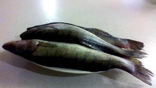 Рыба. Рагу из судака.