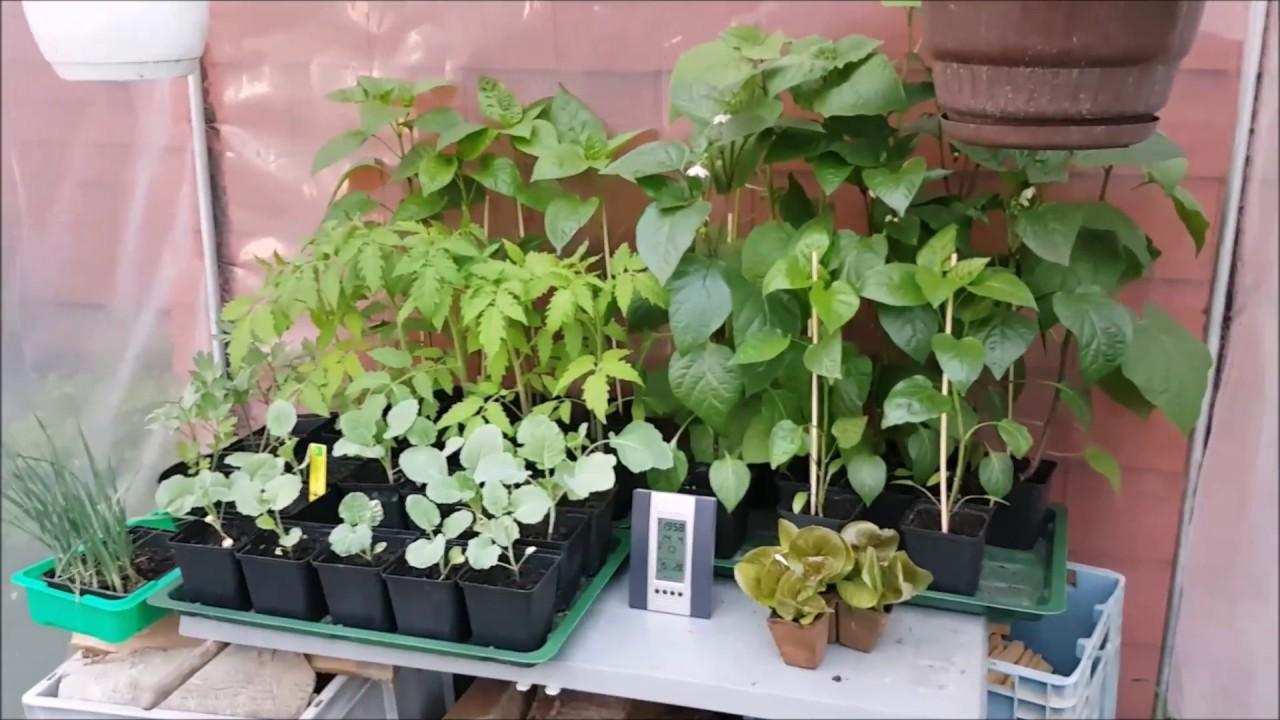 Gartenrundgang Im Hochbeet Und Tomatenhaus Im Fruhling Youtube
