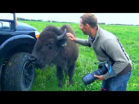 The Photo Warrior: Sarah the pet Bison