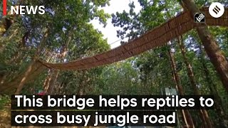 Uttarakhand's unique bridge to help reptiles cross busy jungle road