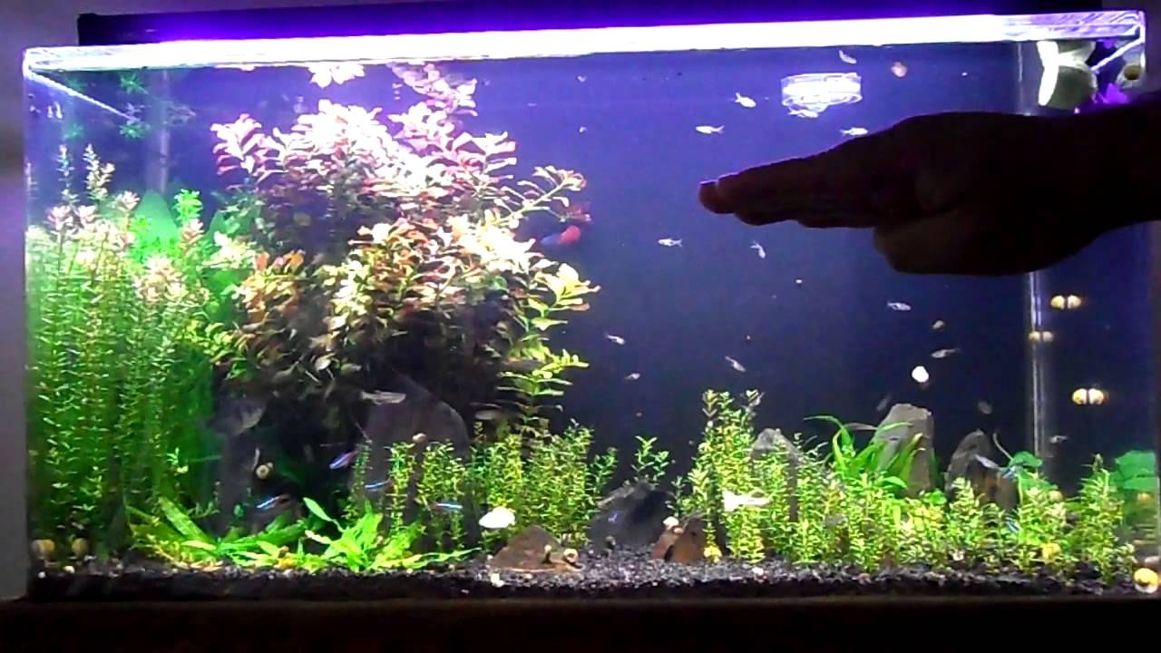 Sea clear system ii 50 gal update 3 youtube for 50 gallon fish tank