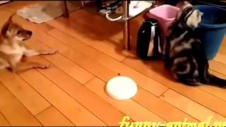 Dog Teases to Cat..Funny Animal | Whatsaap Viral Video