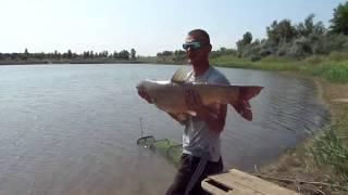 рыбалка в кайф , а не ради наживы , видео для души