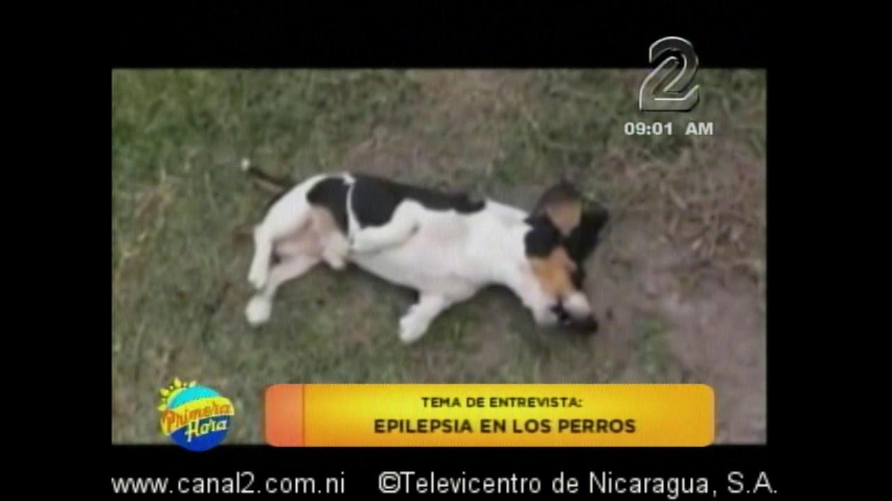 tratamiento alternativo para la epilepsia canina diabetes